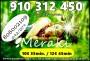 MERAKI VIDENTES FIABLES X 4 EUROS 15 MINUTOS 10 EUROS 35 MINUTOS 910312450