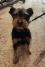 Coco en Adopciò